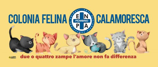 Colonia Felina Enpa Calamoresca Piombino